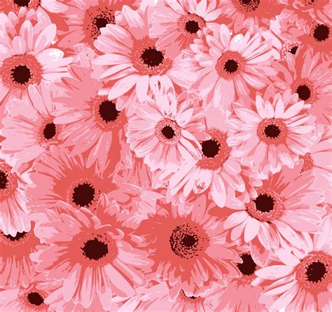 flower background pink flowers background free stock photo domain