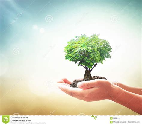 Hidrogel Beautiful Soil Plant human holding growing plant stock image image of health giving 58806155