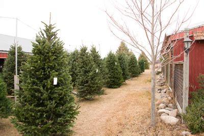 pre cut christmas tree selections