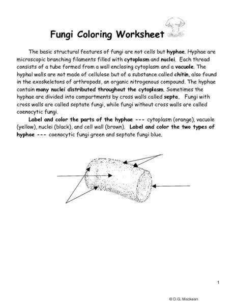 fungi coloring worksheet fungi coloring worksheet fungi coloring worksheet
