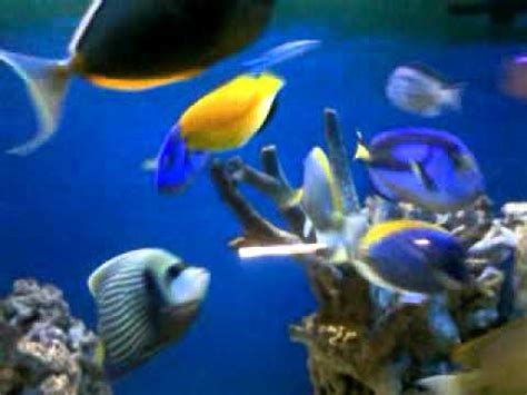 Ikan Hias Laut 48 ikan hias laut