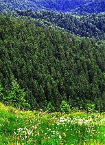 eastern european landscapes biodiversity and societies romanian landscape travel board eastern europe