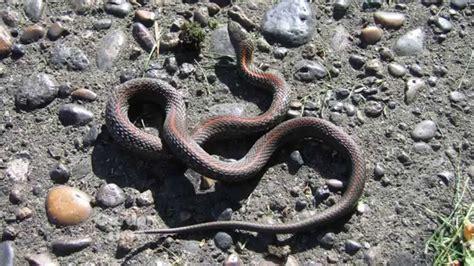 garden snakes youtube