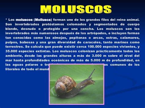 imagenes de animales moluscos animales invertebrados