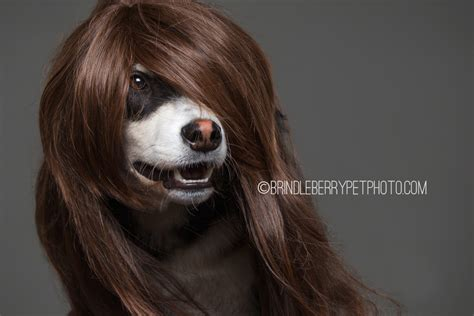 dogs with human hair dogs showcase the trends in human hair and we think they look better than we do