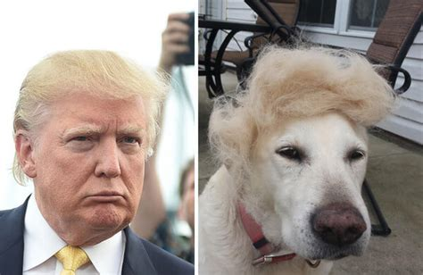 Donald Trump Looks Like | 21 things that look exactly like donald trump