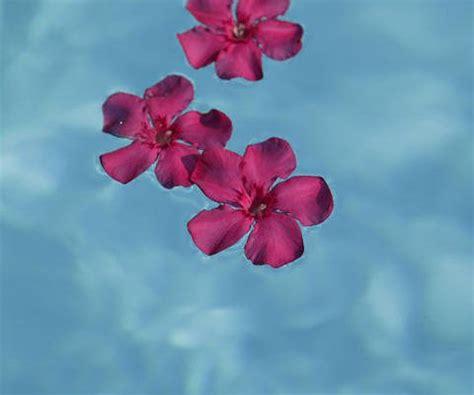 imagenes de flores virtuales feliz san valent 237 n tarjeta de flores gratuita