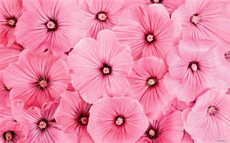 flower wallpaper collection backgrounds pink cute flowers tumblr flower wallpaper