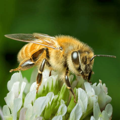 how to get rid of a beehive in your backyard how to get rid of carpenter bees how to get rid of stuff