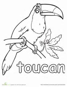 toucan coloring page toucan worksheet education