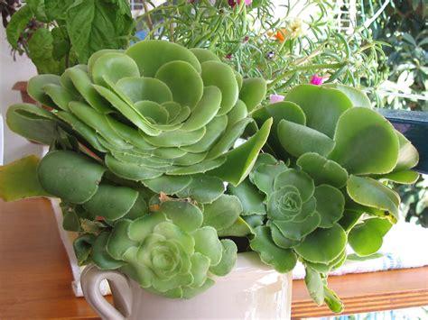 piante da appartamento nomi e foto 73 freddo piante da appartamento nomi home design e foto