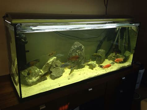 4ft and 3ft aquarium fish tanks for sale cheap 527678b7399c3