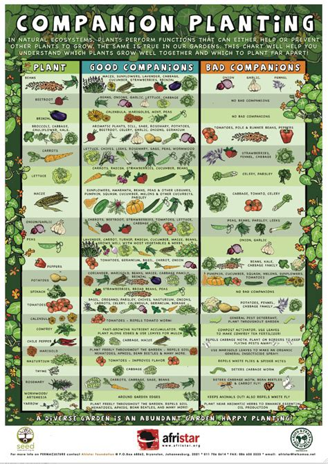 Savvy Housekeeping 187 Companion Planting Companion Vegetable Garden Layout