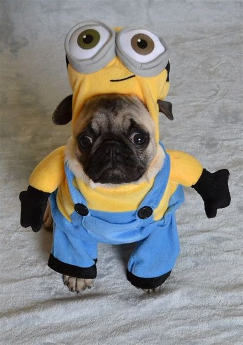 pug costumes uk 128 best images about pug costumes on happy canada day