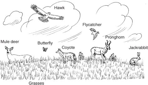 free coloring pages of food web grassland