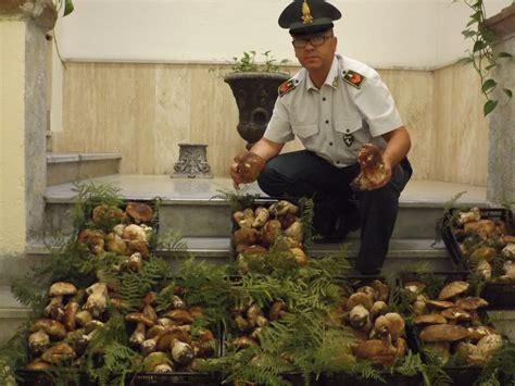 coltivazione funghi porcini vaso fiamme gialle sequestrano funghi privi di certificazioni