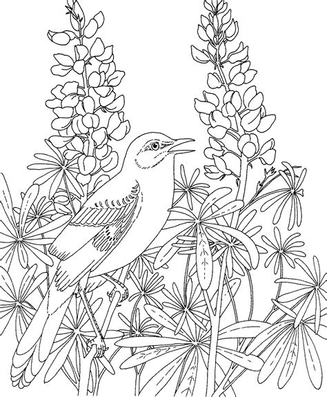 coloring pictures of state flowers free printable coloring page texas state bird northern
