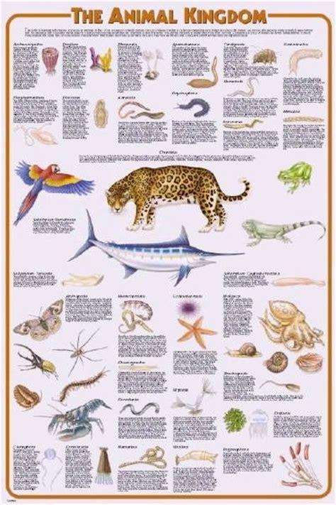 13 best images about animal kingdom on pinterest monkey animal kingdom poster learning place pinterest