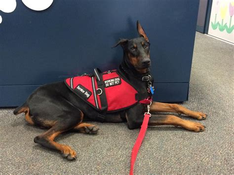 service for dogs selecting the right service vest service certifications