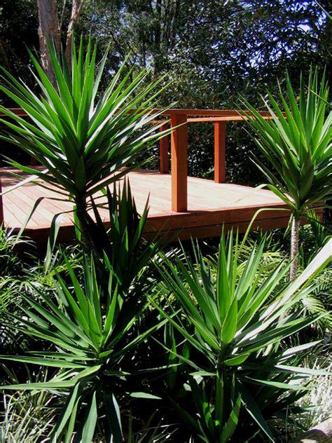 top 28 yucca garden ideas a ravishing zen garden garden designs using yuccas pdf yucca