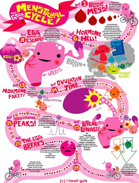 menstrual cup diagram our most popular post of 2012 was this diagram