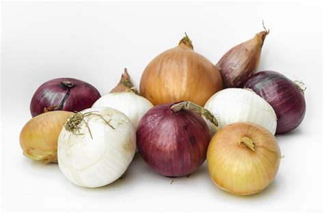 onion medicinal herb info onions and shallots alluim family and antioxidants too