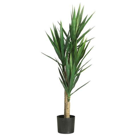 pianta per interni yucca yucca aloifolia piante da interno yucca