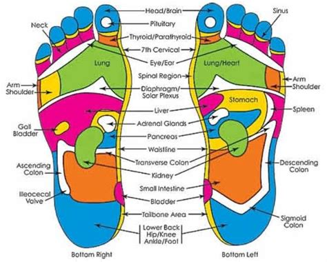 acupressure diagram of pressure points diagram of pressure points in the foot wiring circuit