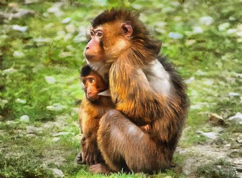99 q to u animals collection stock images page everypixel baby animal photos domain images free baby animals