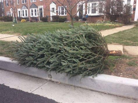 baltimore city christmas tree pick up lizardmedia co