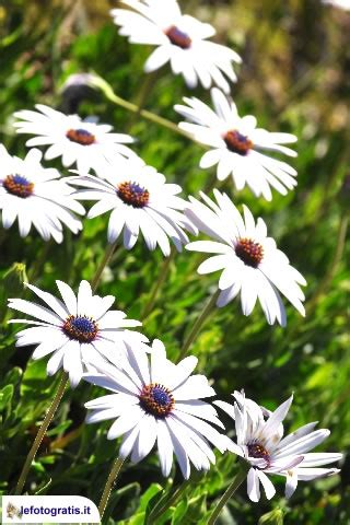 sfondi iphone fiori background iphone smartphone sfondi fiori lefotogratis