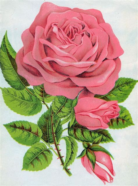 tattoo pictures rose buds 25 best rose buds ideas on pinterest