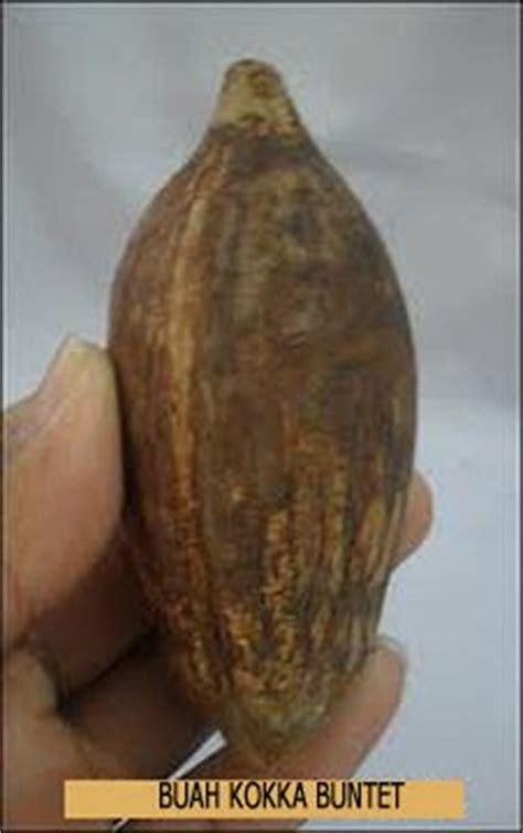 Harga Paket Per 5 Pcs Gelang Kokka Kaukah Oval Kombinasi Wajik kayu kokka kaukah asli tasbih kayu kokka kaukah asli