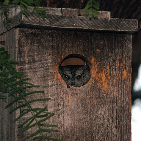 owl house owl bird house image search results