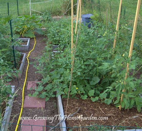 Designing Vegetable Garden Layout 11 Tips For Designing A Raised Bed Vegetable Garden Layout