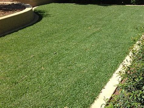 santa anna couch seed instant synthetic lawns adelaide north east