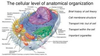 Pics photos cell cell anatomy organelles