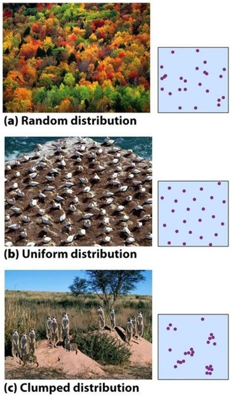 dispersion pattern definition biology population distributions a random distribution b