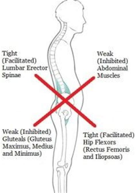 37 best images about psoas on lower backs back and hip flexors