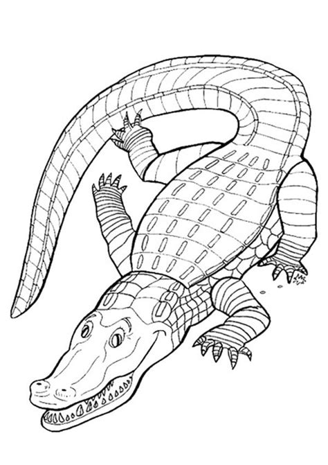 crocodile coloring pages free crocodile colouring page activity