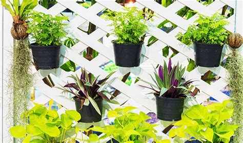Plants Suitable For Vertical Garden 5 Tips For A Versatile Vertical Garden Homehub