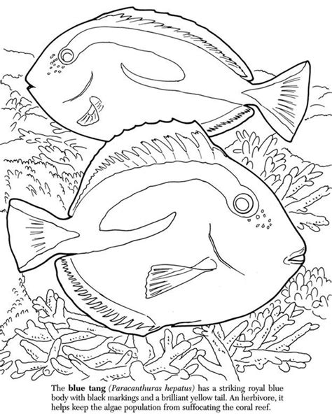 coloring pages coral reef coloring home