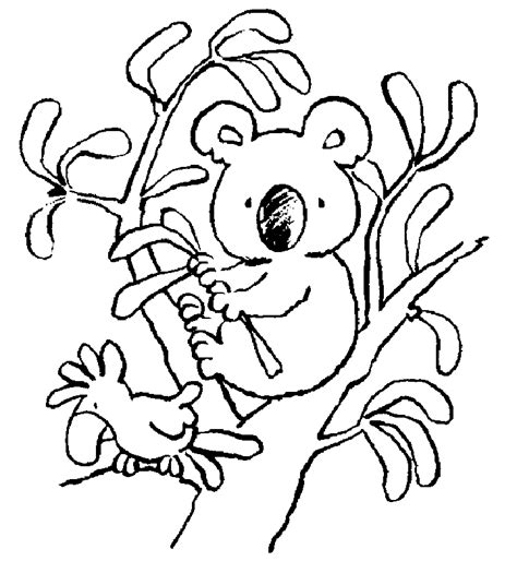 Koala Bear Pictures To Color   AZ Coloring Pages