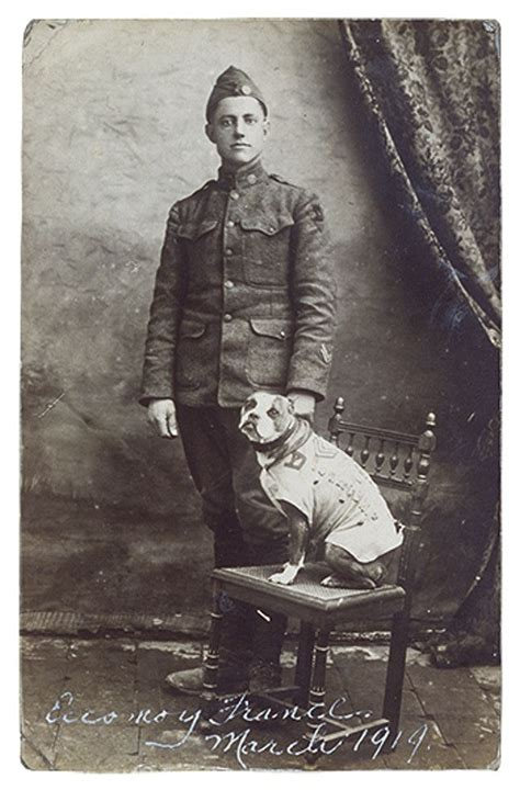 Sergeant Stubby Info 17 Best Images About Sergeant Stubby On Barking Soldiers And American Cross