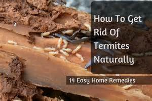 how to get a home remedies how to protect wooden furniture from termites killing