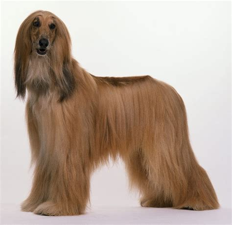 long hair dog hair style
