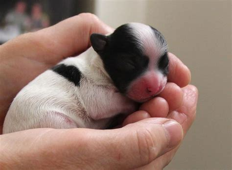 newborn puppies dying new born alfie by sharpk on deviantart