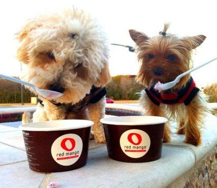 can yorkies eat mango 31 best froyo images on frozen yogurt shop icecream and all alone