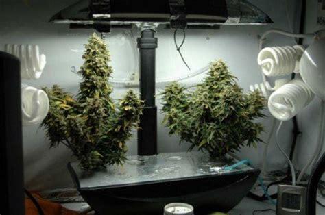 aerogarden marijuana growing easiest   grow weed