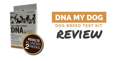 dna my reviews dna my canine breed identification test review